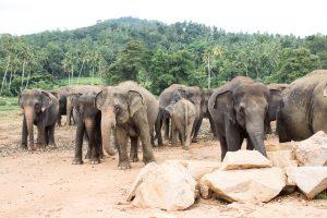 Stunning Sights + 12 Practical Tips for Travel in Sri Lanka