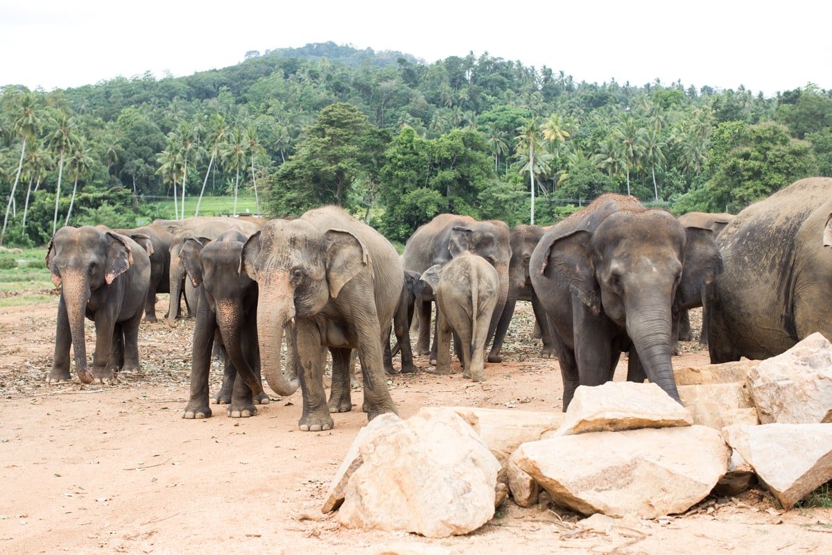Photos From My Trip To Sri Lanka: Beruwala & Kandy