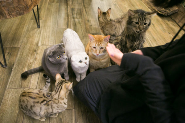 I Went To One Of Those Cat Cafes