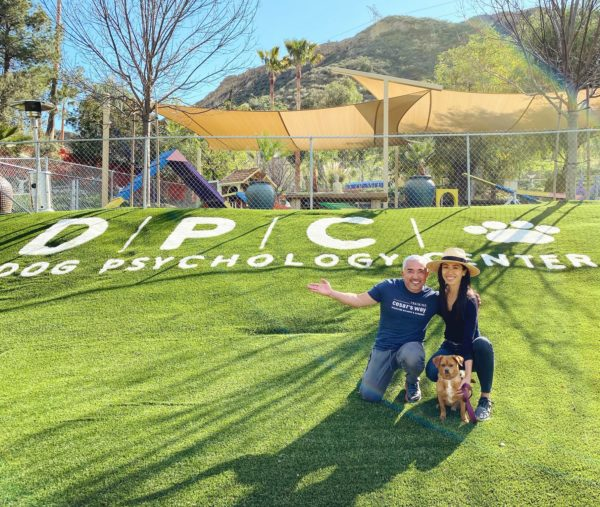 What Training My Dog With Cesar Millan Taught Me